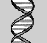closeup of a strand of DNA